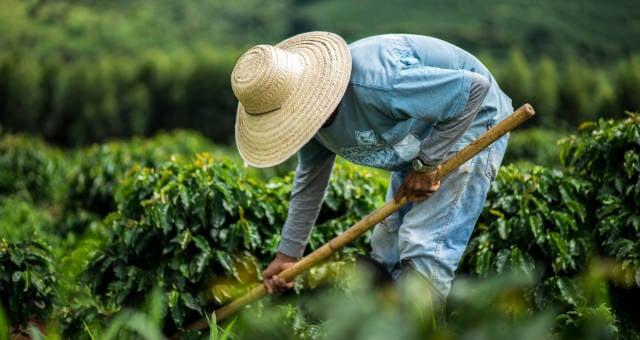 Cafeicultura Café Safras Agronegócio Agricultura