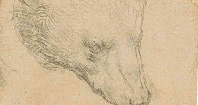 Cabeça de urso, desenho de Leonardo Da Vinci