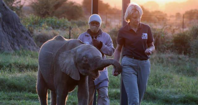 Khanyisa, a elefanta albina da África do Sul