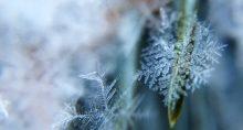 Geada Frio Neve Clima