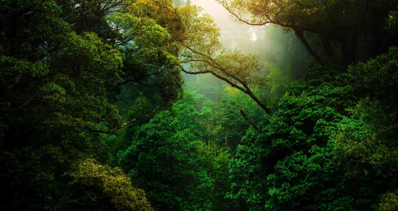 Amazônia Floresta Meio Ambiente ESG