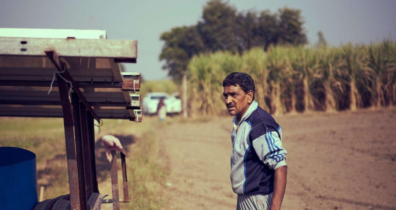 Cana-de-açúcar Agricultura Commodities Agronegócio