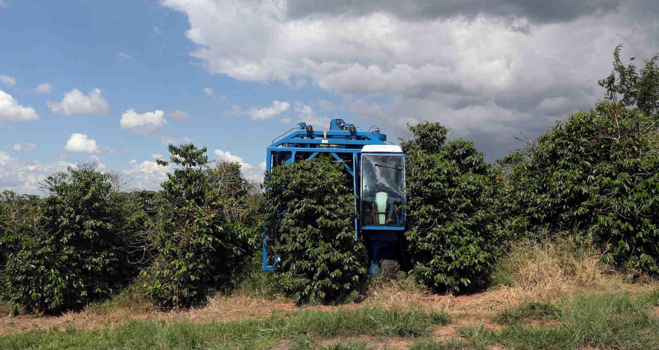 Colheita Café Agricultura Agronegócio