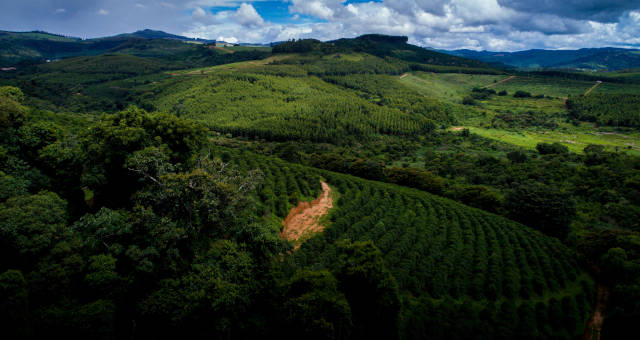 Café Cafeicultura Agricultura Agronegócio