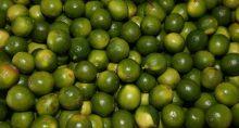 Laranja Fruticultura Citricultura