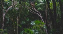 Amazônia Floresta