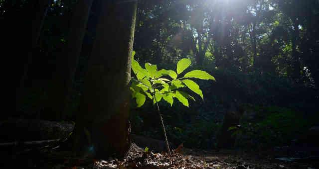 Floresta no Rio de Janeiro