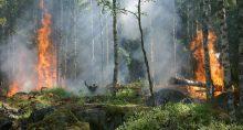 Quiemadas Meio ambiente floresta