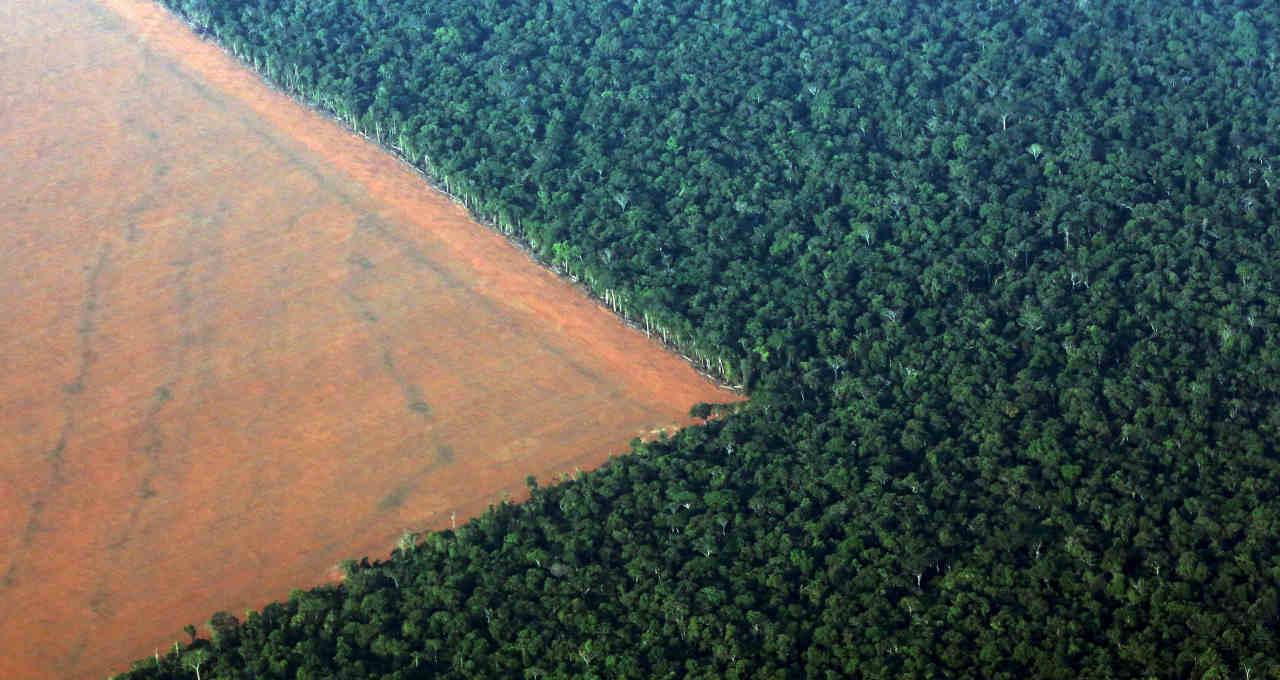 Amazônia Desmatamento Meio Ambiente