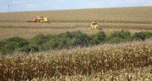 Milho Grãos Agricultura Agronegócio