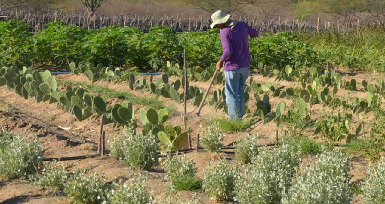 Agricultura Nordeste