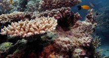 Corais da Austrália