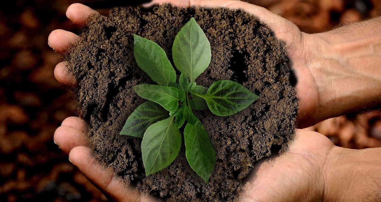 Meio Ambiente Sustentabilidade
