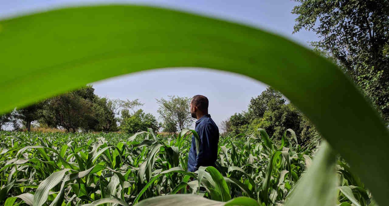 Fazendeiro Agricultura Agronegócio