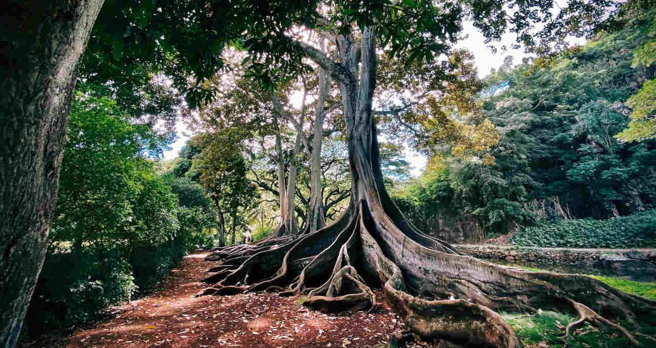 raiz árvore Taproot