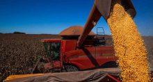 Colheita de milho, colheita de grãos
