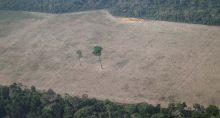 Desmatamento, Amazonas